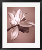 Framed Moonlight Tulip