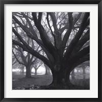 Oak Grove, Winter Framed Print