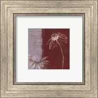 Framed Daisy Sketch II