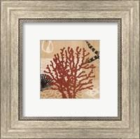 Framed Coral Impressions III