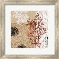 Framed Coral Impressions II