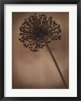 Framed Allium II