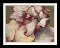 Framed White Begonia