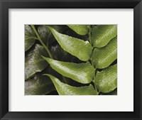Springtime III Framed Print
