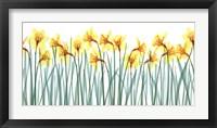 Framed Floral Delight I