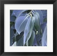 Framed Eucalyptus Leaves