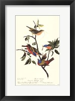 Framed Painted Bunting