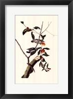 Framed Downy Woodpecker