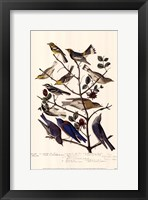 Framed Townsend S Warbler S