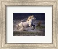 Framed Aquatic Gallop