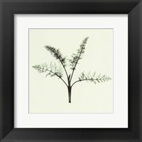 Framed Fennel