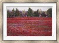 Framed Blueberry Fields in Autumn