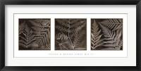 Ferns Mix II Framed Print