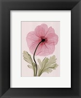 Framed Iceland Poppy I (Sm)