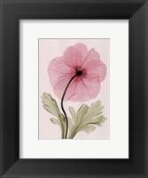 Iceland Poppy I (Sm) Framed Print
