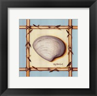 Framed Bamboo Seashell II
