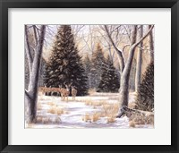 Framed Cedar Sunday