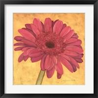 Framed Pink Gerber