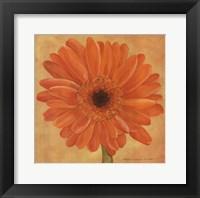 Framed Orange Gerber