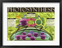 Framed Photosynthesis