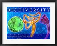 Framed Biodiversity