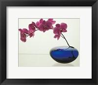 Framed Orchids, 1985