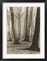 Framed Beech Forest,1936