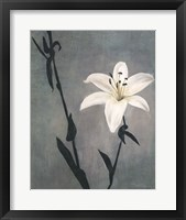 Framed Lily on Grey