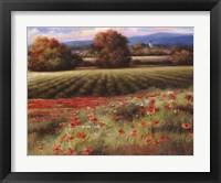 Framed Fields of Provence II