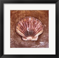Framed Sea Shell