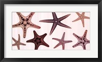 Starfish Collection (Sepia) Framed Print