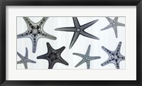 Framed Starfish Collection (Teal)