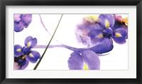 Lucid Iris 2 Framed Print