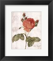 Framed June Rose