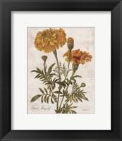 Framed October Marigold