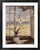Framed Ocean Amaryllis