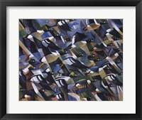 Framed Goldeneyes