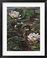 Framed Frog In Lily Pond