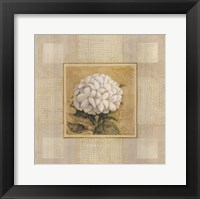 Framed White Flower