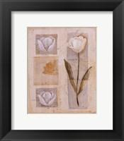 Framed White Tulip Montage