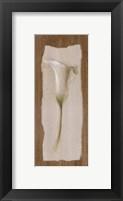Framed White Cala Lilly