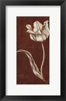 Framed White Tulipa N 42