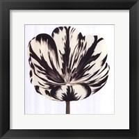 Framed Black White Flower