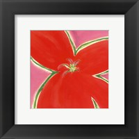 Framed Red Flower With Pink Background