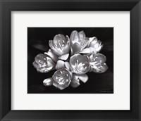 Framed Camellia Bloom