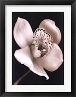 Framed White Black Speckled Flower