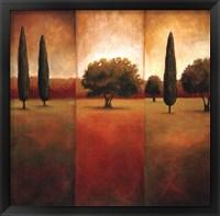 Framed Lone Pine