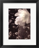 Glowing Tulip I Framed Print