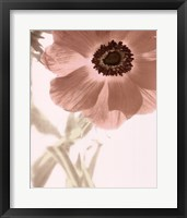 Framed Anemone Radiance