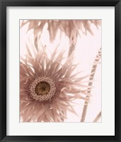 Gerbera Breeze II Framed Print